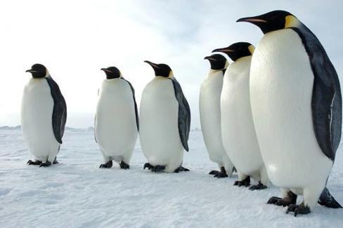 !!!!!Penguins1